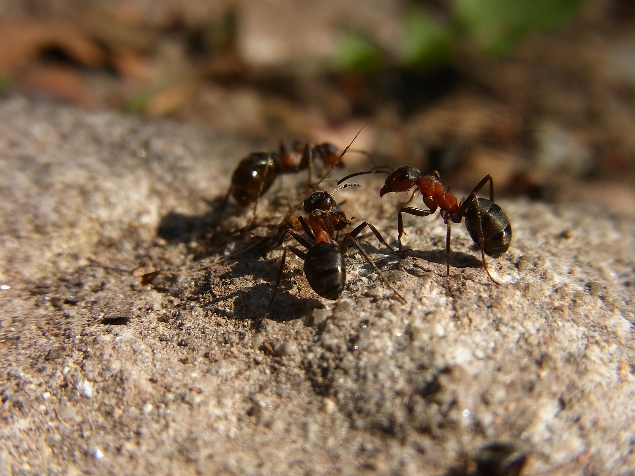 natural ant killer raw foods girl. Black Bedroom Furniture Sets. Home Design Ideas