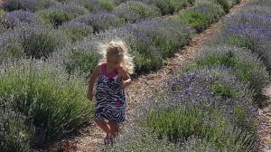 Baby Hailey in Lavender Farm